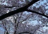 4月🌸テーマは「薄着」(*^^*)